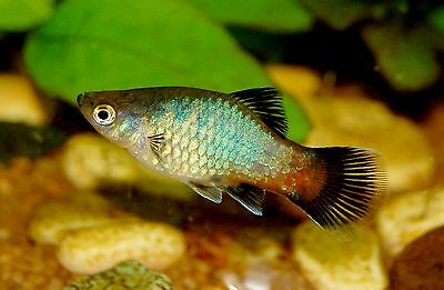 TetraMin Holiday food for tropical fish 3