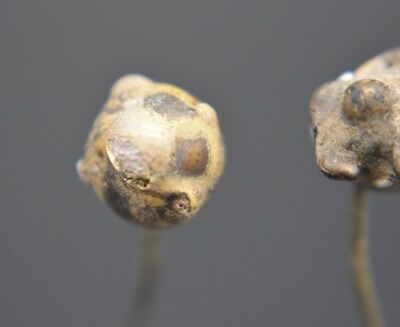 Group of 2 ancient Phoenician decorated glass pins 2nd - 1st millennium BC 2