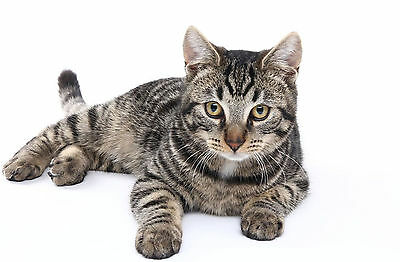 Trixie Cat Kitten Snack Ball Treat Ball Feeding Ball Keep Cats Entertained 41362