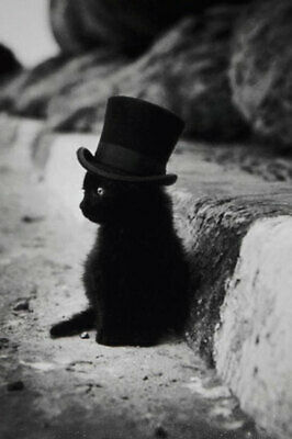 Vintage Cat in a Hat Photo 755 Oddleys Strange & Bizarre 2