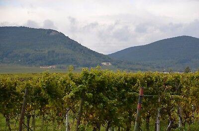 Weingut Kraus: 18 Fl. 1 l Probierpaket Weißweinprobe Nr 7 5