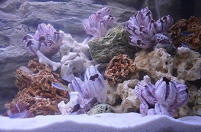 15 Kg  Natural Light Limestone Ocean Rock For Malawi Cichlid Aquarium Fish Tank 6