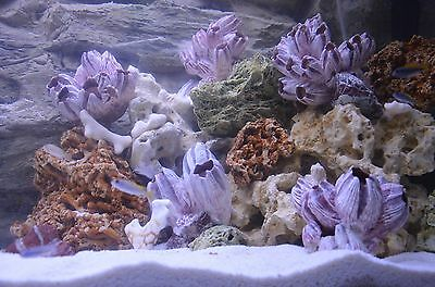 20 Kg  Natural Light Limestone Ocean Rock For Malawi Cichlid Aquarium Fish Tank 6