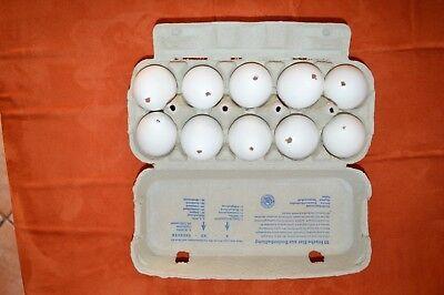 10 Echte ausgeblasene Hühnereier weiße Eier Ostern Bastelei  Osterdeko  Top !