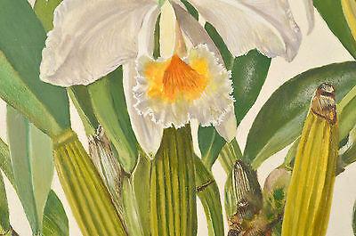 Cattleya Orchidee 3 Kolibri Heade 100/% Cotton Leinwand Bild Aufdruck