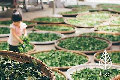 ORGANIC Japanese Matcha Green Tea Powder - Latte - Up to 200 Serves 9