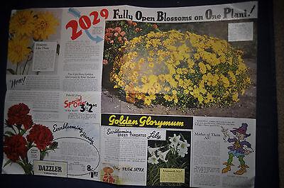 1937 Kelloggs Plant Catalog, Three Rivers, Michigan, Azaleamum, Glorymum,