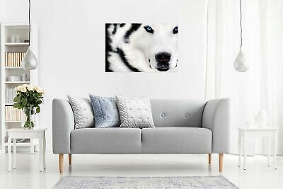White Wolf Animal Artwork Canvas Wall Art Picture Print 3