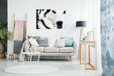 White Wolf Animal Artwork Canvas Wall Art Picture Print 2