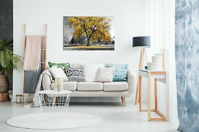 Large Tree Yellow Leaves Black White Nature Canvas Wall Art Picture Print 2