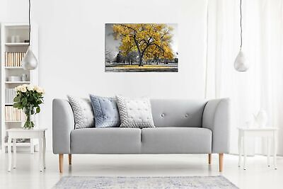 Large Tree Yellow Leaves Black White Nature Canvas Wall Art Picture Print 3