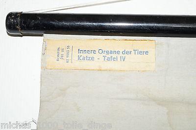 alte Rollkarte Rolltafel Lehrtafel Wandkarte Innere Organe der Tiere Katze Tafel