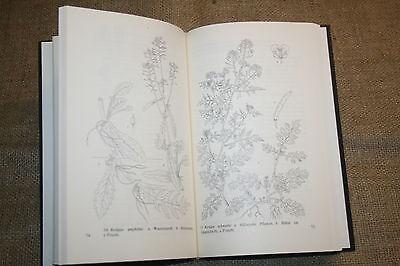 Fachbuch der Kreuzblütler, Botanik, Kohl, Rauke, Schaumkraut, Kräuter, DDR 1988
