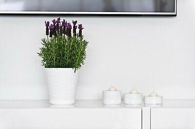 Flowerpot Plant Pots CHEAP Indoor Cover Colored Tedi Decorative Plastic Modern