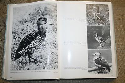 Fachbuch Die Entenvögel der Welt, Enten, Wasservögel, Federvieh, Haltung, Zucht