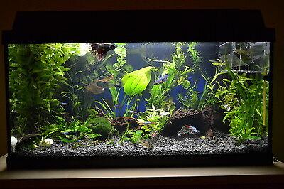 20 KG NATURAL BLACK AQUARIUM GRAVEL 2-5mm AQUASCAPING IWAGUMI IDEAL FOR PLANTS 9