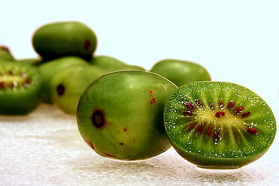 Actinidia Arguta - Hardy Kiwi -34C (50 Seeds) 2