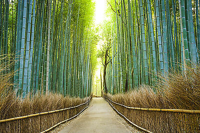 JAPAN BAMBOO FOREST Wall Mural Photo Wallpaper GIANT WALL DECOR