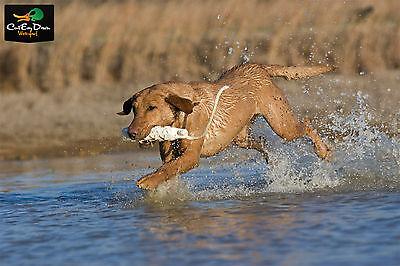 "AVERY OUTDOORS SPORTING DOG 2/"" ORANGE HEXA-BUMPER DOG TRAINING RUBBER DUMMY"