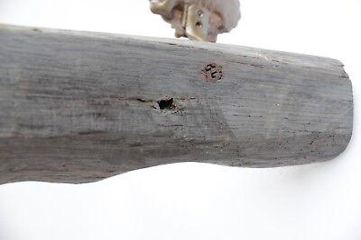 antique maritime bog oak wooden sail rack with brass shell hooks 11