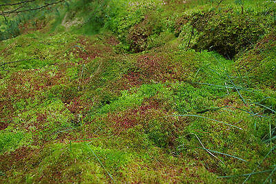 10Kgs FRESH SPHAGNUM MOSS, Loose, Best Quality, New Spagnum Sold Moist as picked 3