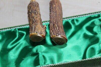 Vieux Viande Couverts avec Hirschhorn Poignée dans Étui Doré 33cm 2