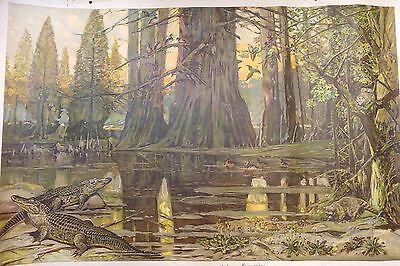 Schulwandbild. - Nordamerika. - Mississippi Ca. 1910