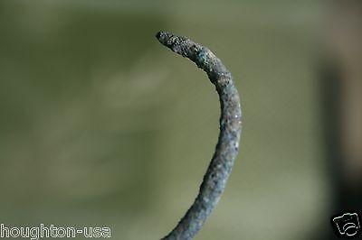 Ancient Bronze Viking Dragon Bracelet c. 800-1100 AD. Lady's Jewelry & Amulet!