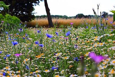 Bienenweide Blüh WIESE Samen Artenschutz BLUMEN 1200Samen Rettet die BIENEN