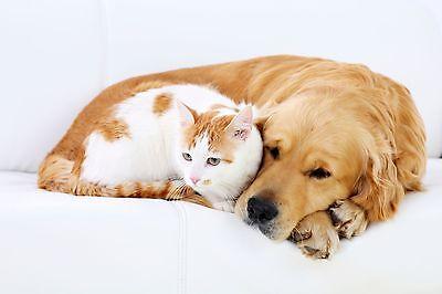 Beaphar Dog Cat  Flea Spray PUMP ACTION Cutaneous spray solution 150ml 2