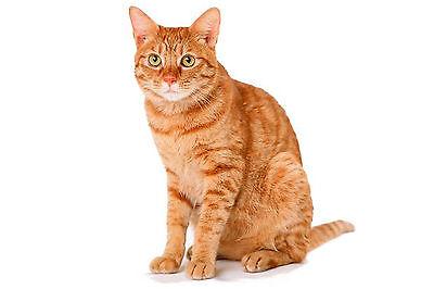 Beaphar Cat Flea Spot On 4 Week Pack CG17811/6 2