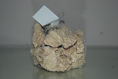 Aquarium Cichlid Coral Rock 0.8 Kilo Bag Small Size Suitable for Aquariums 4