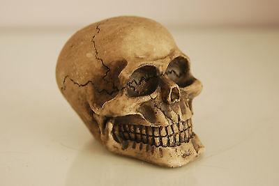 Vivarium Decoration Human Skull 7.5 x 6.5 x 6.5 Suitable For All Reptile Tanks 4
