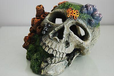 Aquarium Detailed Old Pirate Skull Remains & Coral Decoration 18x15x13 cms + Air 4
