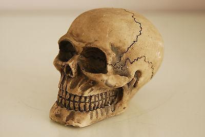 Vivarium Decoration Human Skull 7.5 x 6.5 x 6.5 Suitable For All Reptile Tanks 2