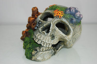 Aquarium Detailed Old Pirate Skull Remains & Coral Decoration 18x15x13 cms + Air 5