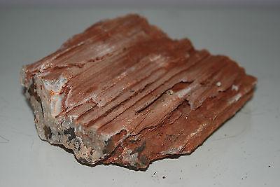 Natural Aquarium Redwood Lines Rock x 2 Pieces Suitable for Aquariums 4E 2