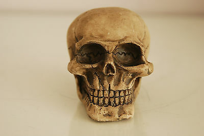 Vivarium Decoration Human Skull 6.5 x 5 x 5 Suitable For All Reptile Tanks 3