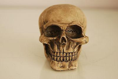 Vivarium Decoration Human Skull 7.5 x 6.5 x 6.5 Suitable For All Reptile Tanks 3