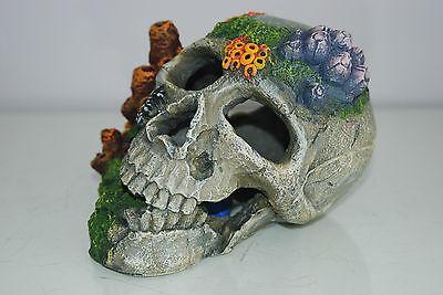 Aquarium Detailed Old Pirate Skull Remains & Coral Decoration 18x15x13 cms + Air 8