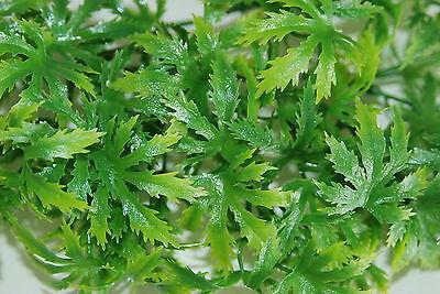 Vivarium Realistic Plastic Plant Canabis Medium 38 cms For Vivarium Use 2