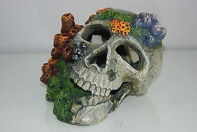 Aquarium Detailed Old Pirate Skull Remains & Coral Decoration 18x15x13 cms + Air 2