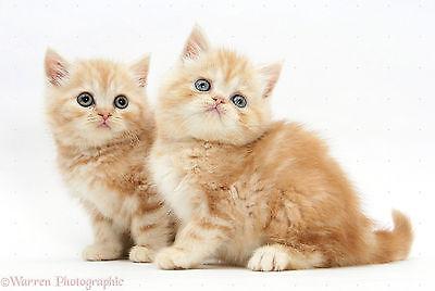 Beaphar Cat Spot On Repels Fleas 12 Week Pack 3
