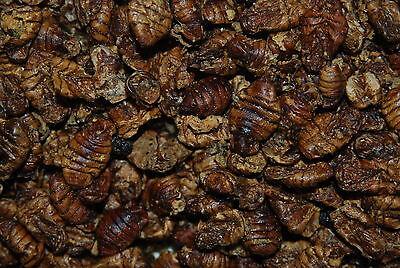 FMF Dried Silkworm Pupae For Koi Carp Fish Birds & Reptiles Approx  730g Tub 2