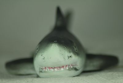 Small Floating Shark for Small Garden Pond or Aquarium,a Useful Present or Gift 8
