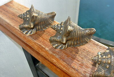 4 small SHELL FISH solid 100% BRASS knobs TROPICAL VINTAGE old style 75 mm B 5