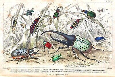 1853 Goldsmith Vol I&II HISTORY of EARTH ANIMATED NATURE Bugs/Birds/Fish PLATES 3