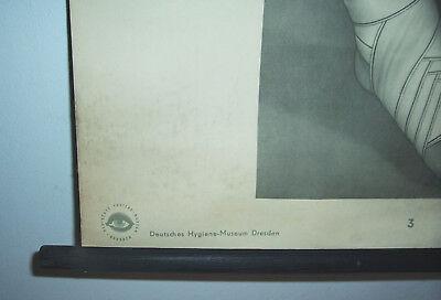 "Rollkarte Lehrkarte "" Bindenverbände II "" Hygiene Museum Dresden deko vintage (4"