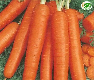 Zanahoria Nantesa TORO ( 2.000 semillas ) seeds - carrot 2