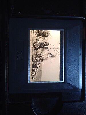 """Bobo African Tribal Art /""""Dancers/"""" 35mm Vintage Glass Slide"""